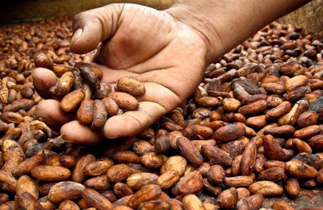 chocolate el ceibo produccion
