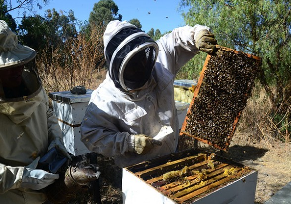 apicultores