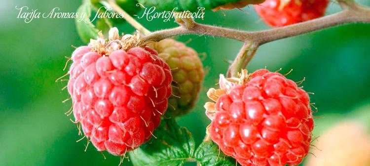 aromasysabores1