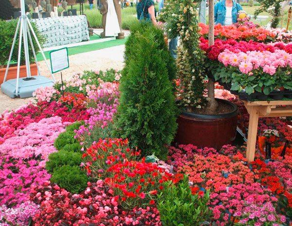Feria de flores en Mallasa. Fuente: El Diario
