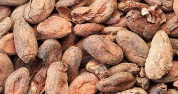 cacao Bolivia