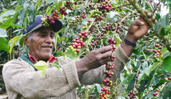 Productores de café de La Paz invaden el mercado chino - Noticias