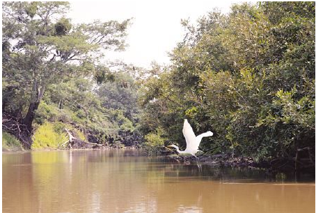 Un ave vuela en la Amazonia boliviana, uno de los destinos turísticos./Fuente Página Siete