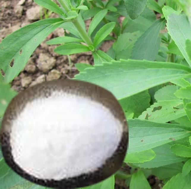 Stevia, un edulcorante natural/dacon