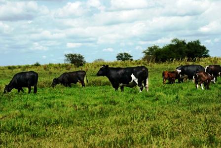 Proyecto. Los ganaderos buscan ampliar un 15% el hato ganadero en la Chiquitania los próximos tres años./Fuente El Día