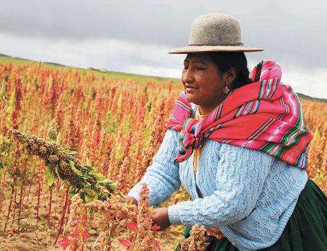 Agricultura-campesina