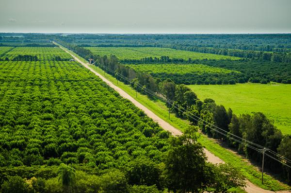 plantaciones-totai-citrus